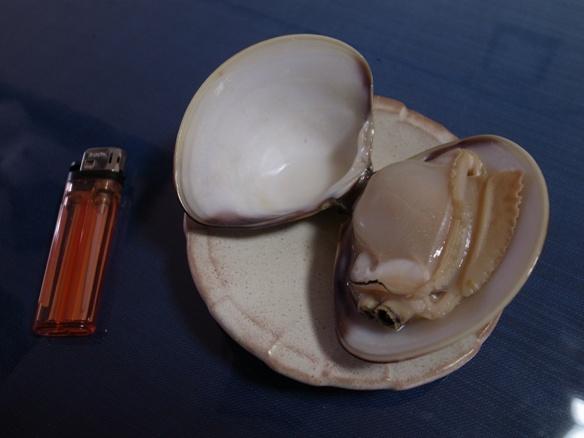 hamaguri2